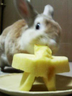 六をむさぼるウサギ